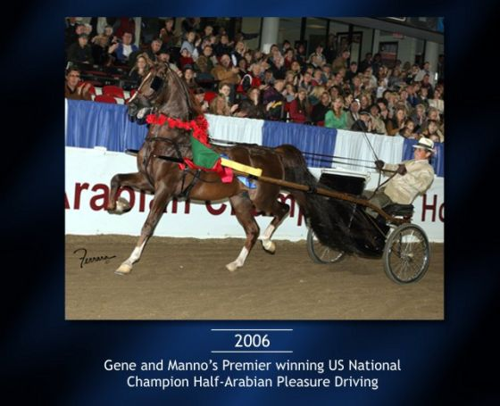13-Gene-US-National-Champion-Half-Arabian.jpg