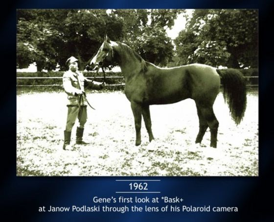 01-Gene-first-look-at-Bask-at-Janow-Podlaski.jpg
